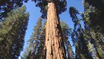 Der größte Baum der Welt ist über 2.000 Jahre alt