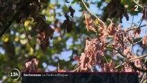 Alsace : de nouvelles espèces d'arbres pour supporter la sécheresse ?