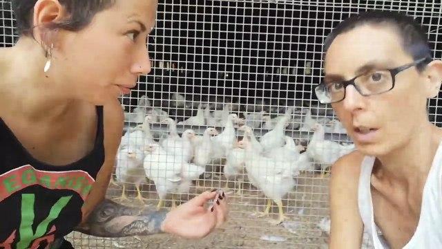 """Se hace viral el vídeo de las veganas que no quieren """"que los gallos violen a las gallinas"""""""