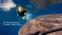 Sir Richard Branson Swims With Whale Sharks In Gulf Of Mexico