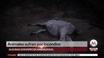 Animales sufren por incendios en el Amazonas
