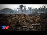 Fuego en la Amazonia: peligran cientos de especies