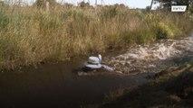 ويلز: الغطس في المياه الموحلة