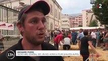 Hautes-Alpes : les attaques de loup radicalisent les éleveurs