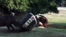 Un rhinocéros renverse la voiture de la gardienne d'un zoo en Allemagne