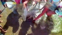 Jaw-Dropping Video Shows Beach Goers Trying to Save Massive Jellyfish That Washed Ashore!