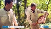 Gers : quand deux cadres parisiens plaquent tout pour devenir apiculteurs