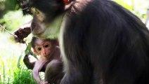 London Zoo's Rare Newborn Monkey Named After Astronaut Buzz Aldrin
