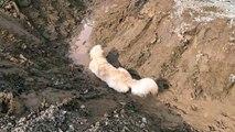 Ce joli chien adore jouer dans la boue