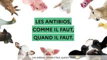 Animation : Les antibios, comme il faut, quand il faut