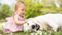 Perros que protegen bebés