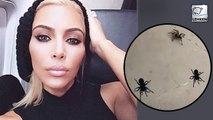 Kim Kardashian Finds Giant Tarantulas In Her House And People Freak Out!