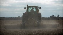 UK Farmers Wants Import Tariffs If Johnson Follows Through With No-Brexit Deal