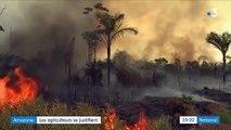 Amazonie : le rôle des agriculteurs dans la déforestation