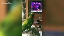 Ce perroquet danse et chante sur cette chanson en Inde !
