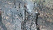 Nuevos focos de incendios dificultan la lucha contra el fuego en el Amazonas