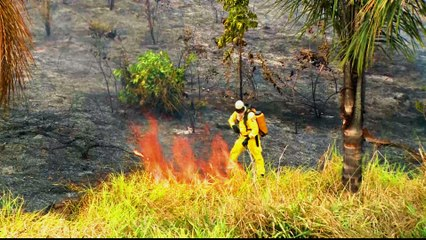 Amazon fires: burning continues despite ban