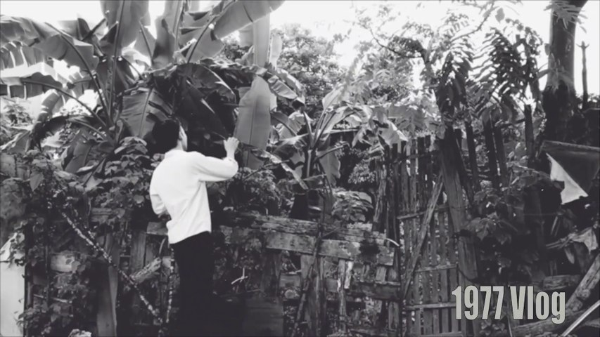 Phim Ngắn Cậu Vàng Trong Vai Chó Shiba Và Lão Hạc Bản Hài Hước Mới Nhất Spoil   Godialy.com