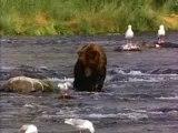 ours en maillot de bain