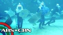 Biggest Oceanarium sa Cebu | Rated K