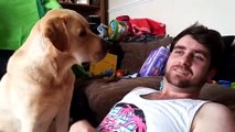 Ce chien n'aime pas quand son maître ne fait pas attention à lui
