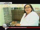 Stowaway cat Pinay only 'responds' to Tagalog