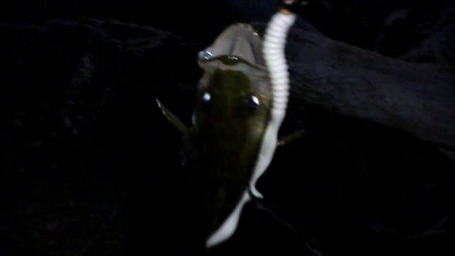 MCH 178.NIGHT FISHING GLENIFFER LAKE ALBERTA CANADA. JIJING.