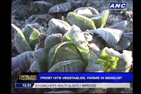 Frost hits vegetables, farms in Benguet