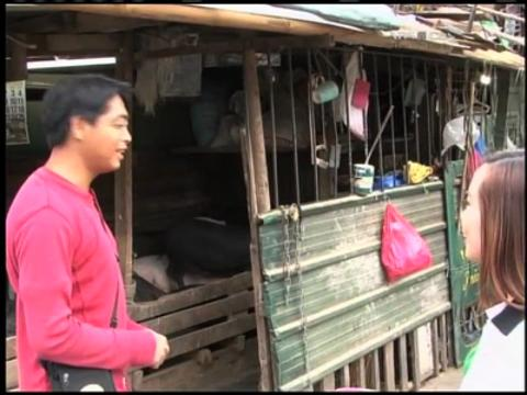 Baguio livestock getting sick due to cold weather