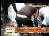 120 turtles rescued in Palawan