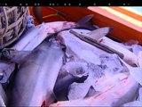 WATCH: Dead sharks found in Vietnamese poaching vessel