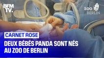Deux bébés panda sont nés au zoo de Berlin