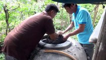 Thai fisherman finds alligator gar 9,000 miles from its native home in the Mississippi River