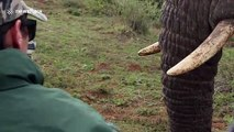 Tourists experience close encounter with gentle giant elephant in South Africa