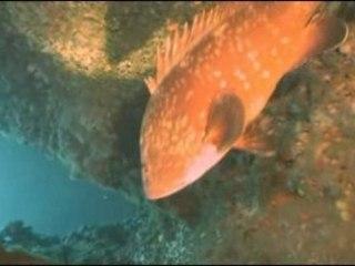 Medes el dolphi 2005