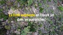 La forêt augmente en France (et dans les pays riches)