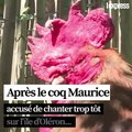 Après le coq Maurice, des canards accusés de caqueter trop fort