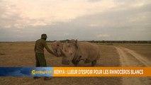 Lueur d'espoir pour les rhinos blancs du nord du Kenya [The Morning Call]