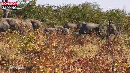 Enquête Exclusive : Bernard de la Villardière et son équipe chargés par des éléphants (Vidéo)