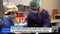Paulo Cafôfo defende cooperação entre câmaras e governo na recolha de animais abandonados