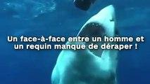 Un face-à-face entre un homme et  un requin manque de déraper !