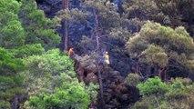 Muğla'da orman yangını (5)