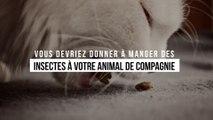Les vétérinaires l'affirment : vous devriez donner à manger des insectes à votre animal de compagnie