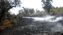 Kemalpaşa'da orman yangını