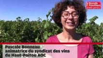 VIDEO. Poitiers : vendanges prometteuses pour le Haut-Poitou AOC