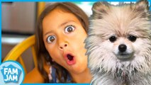 Lost puppy found? Teamwork for Kids