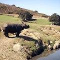 Ce rhinocéros possédant une corne est majestueux. Admirez !