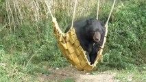 Chuck the bear climbs into a hammock to enjoy the last rays of summer sun at Woburn Safari Park