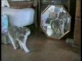 Drole de chats, Funny cats