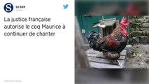Le coq Maurice peut continuer de chanter en toute liberté sur l'île d'Oléron, a tranché la justice